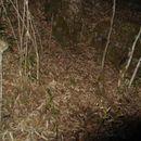 Sivun Burmanvuoriorava kuva