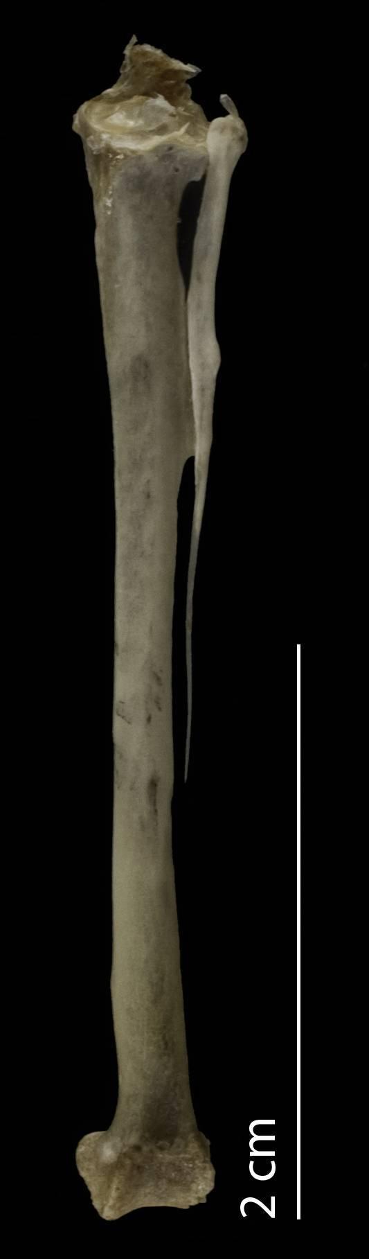 Image of Green Wood Hoopoe