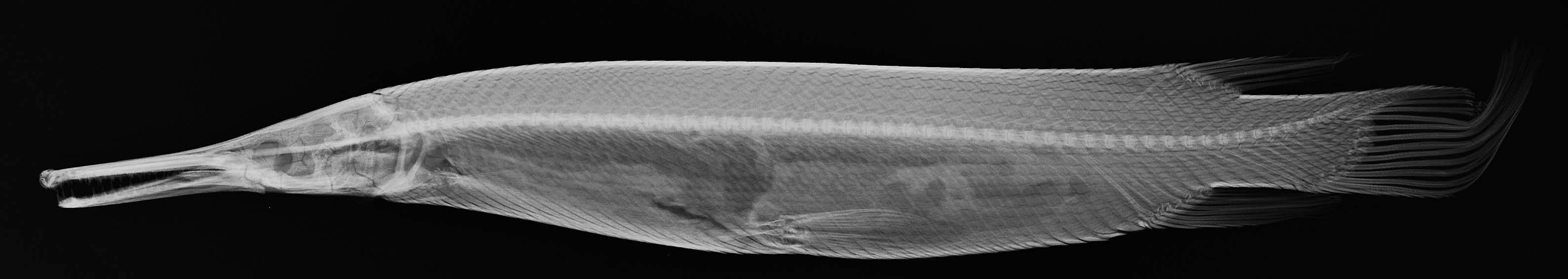 Image of tropical gar