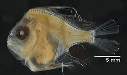 Image of manefishes