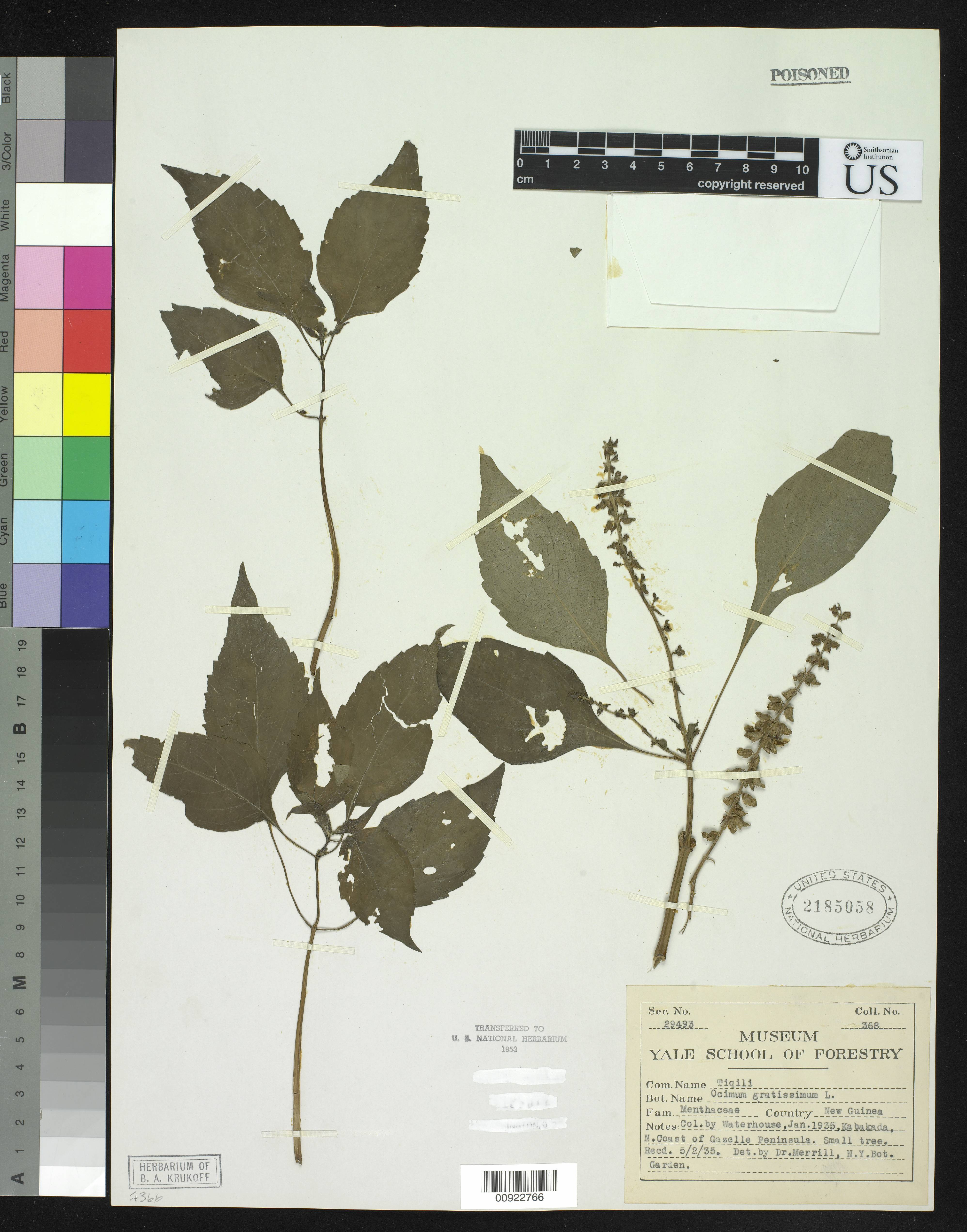 Image of African basil