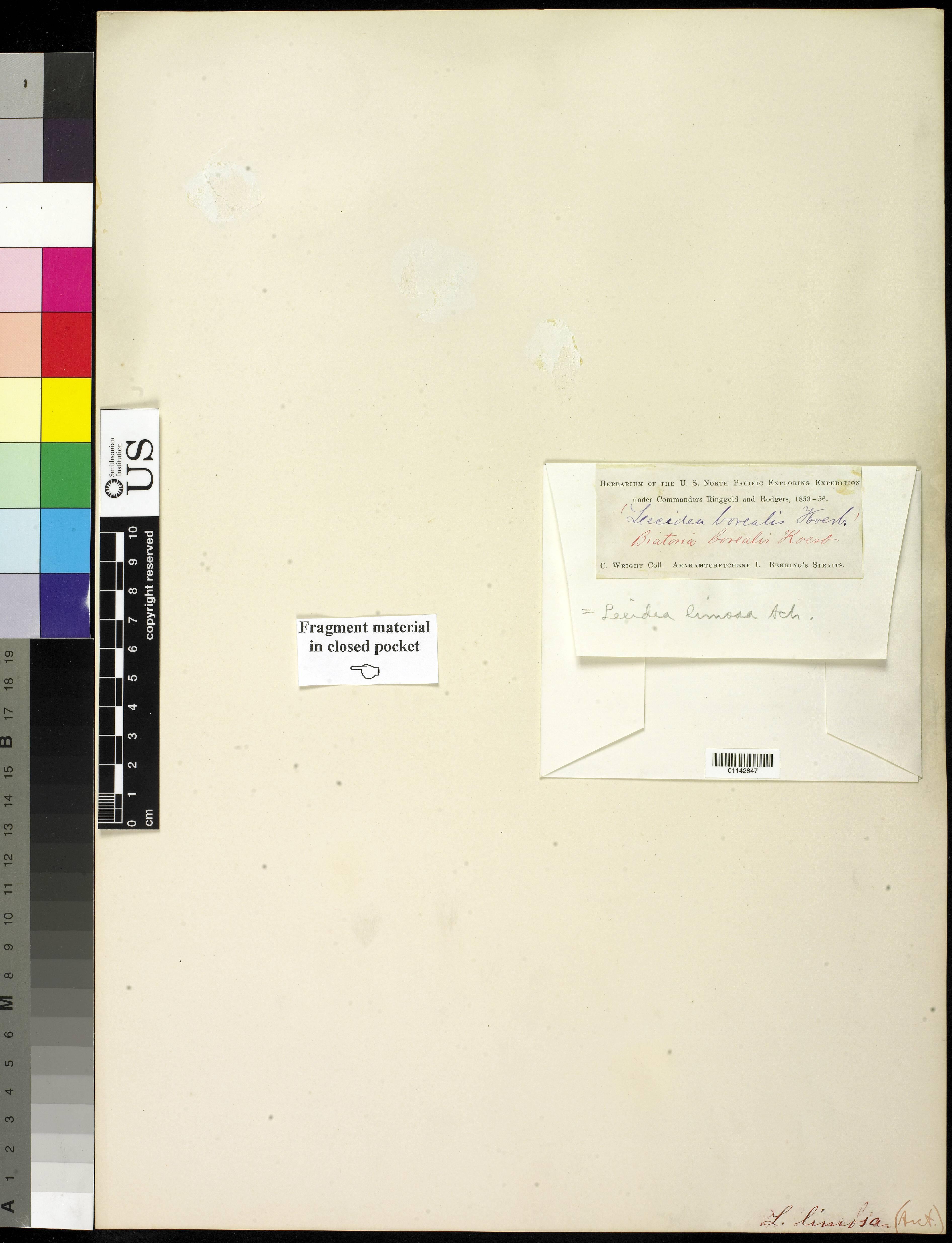 Image of <i>Protomicarea limosa</i> (Ach.) Hafellner