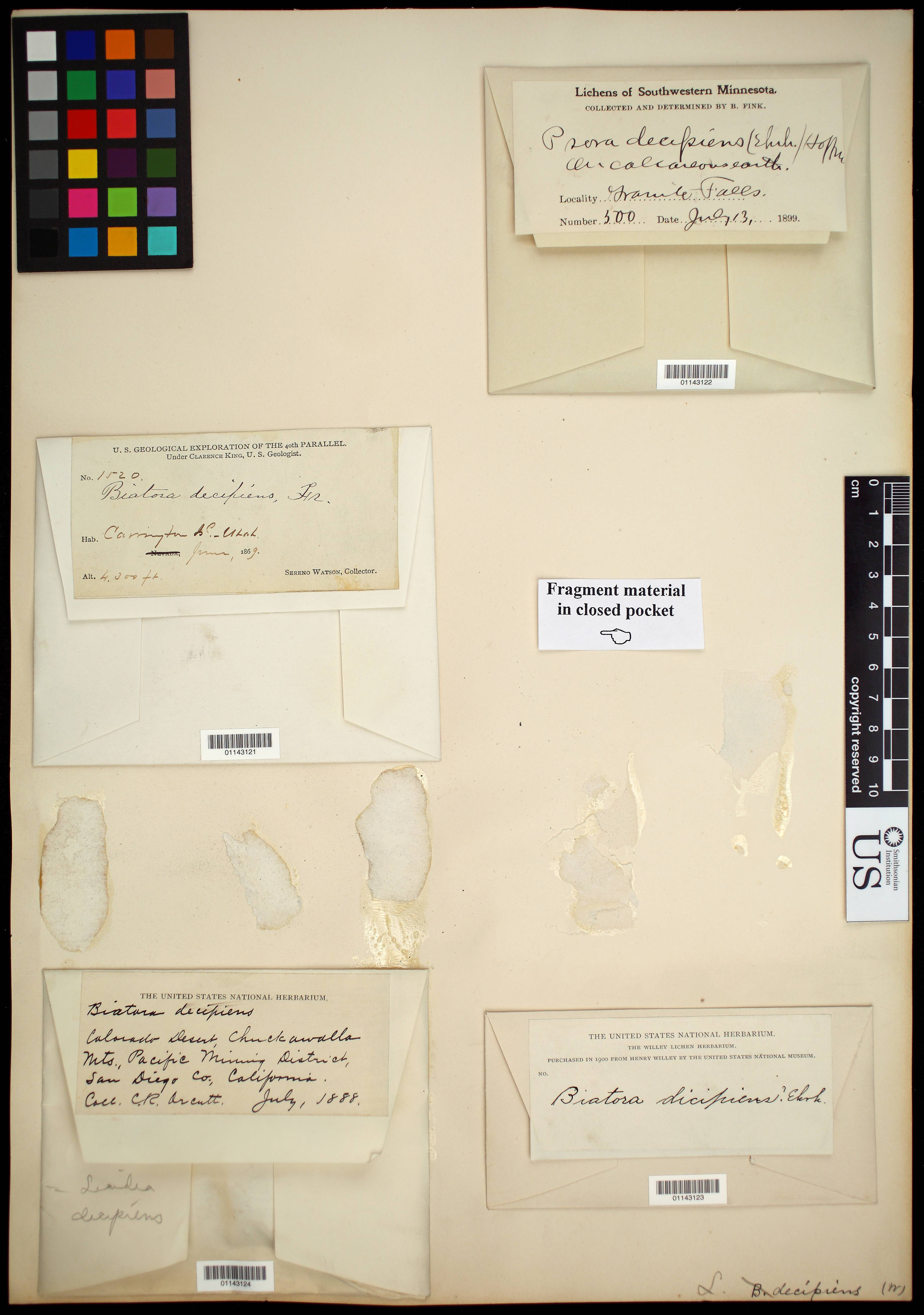Image of <i>Psora decipiens</i> (Hedw.) Hoffm.