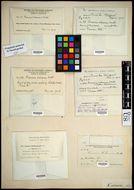 Image of <i>Entosthodon muhlenbergii</i> Fife 1985