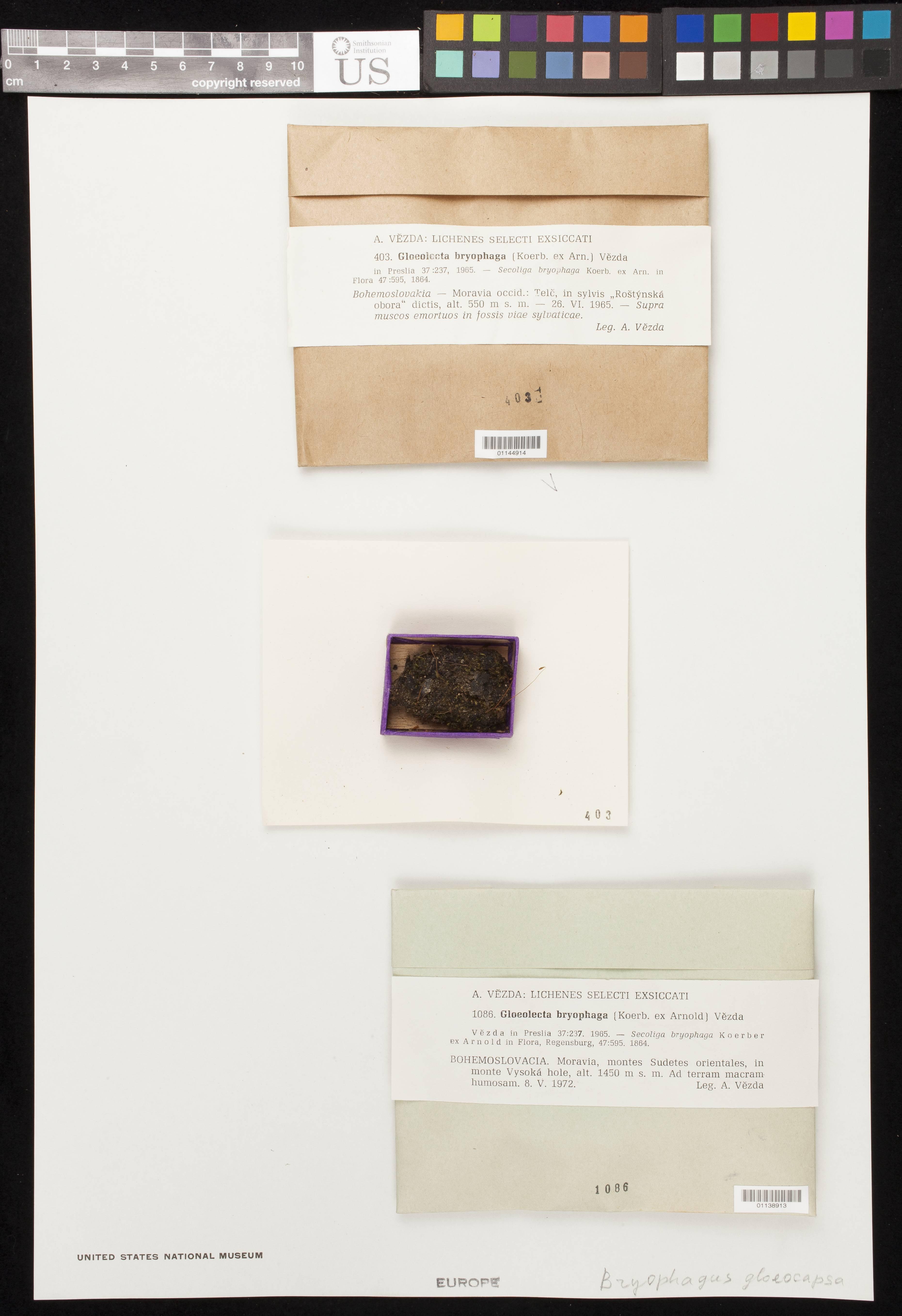 Image of <i>Bryophagus gloeocapsa</i> (Nitschke ex Arnold) Baloch, Gilenstam & Wedin