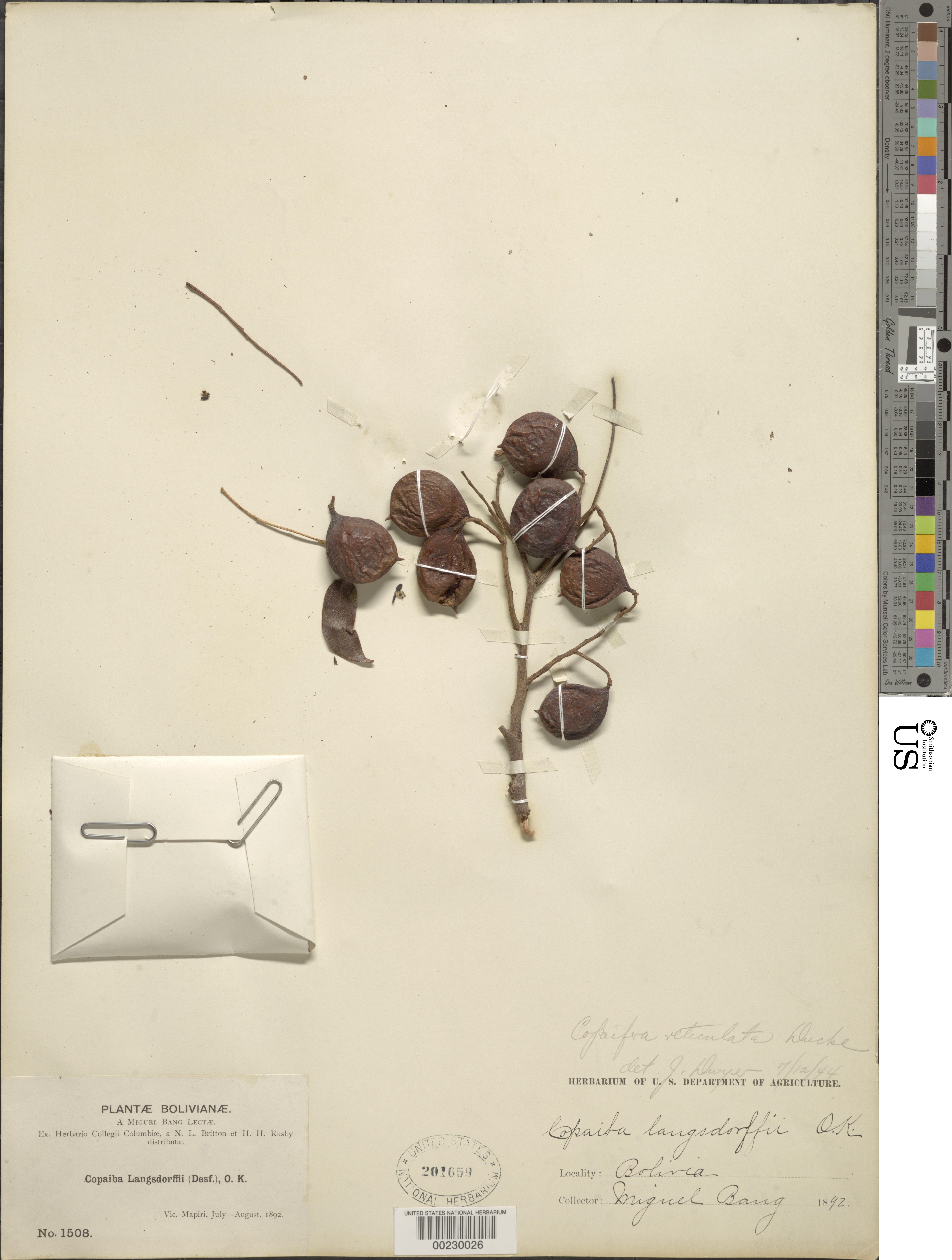 Image of <i>Copaifera reticulata</i> Ducke