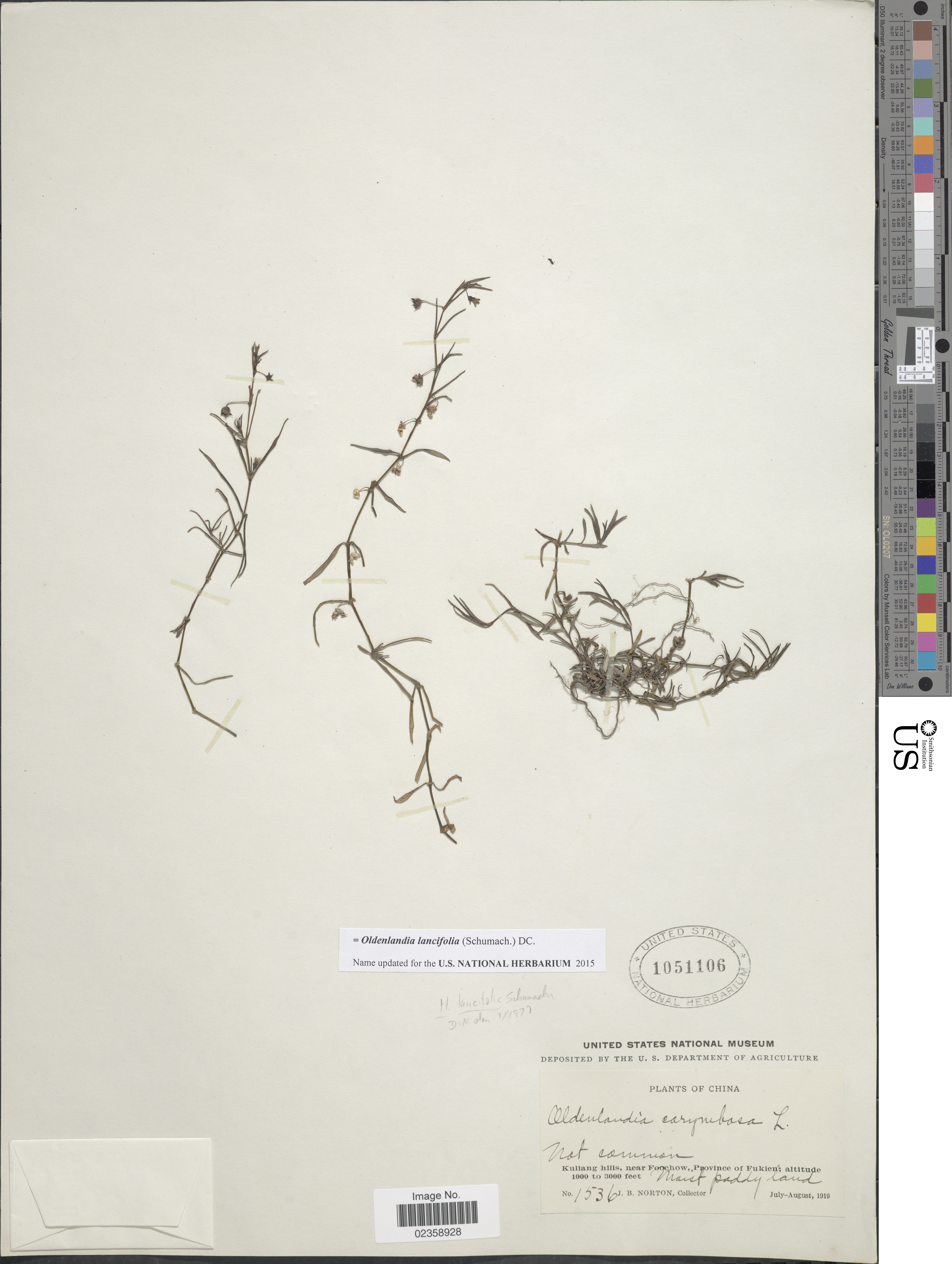 Image of calycose mille graines