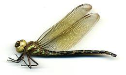 Image of Swamp Darner