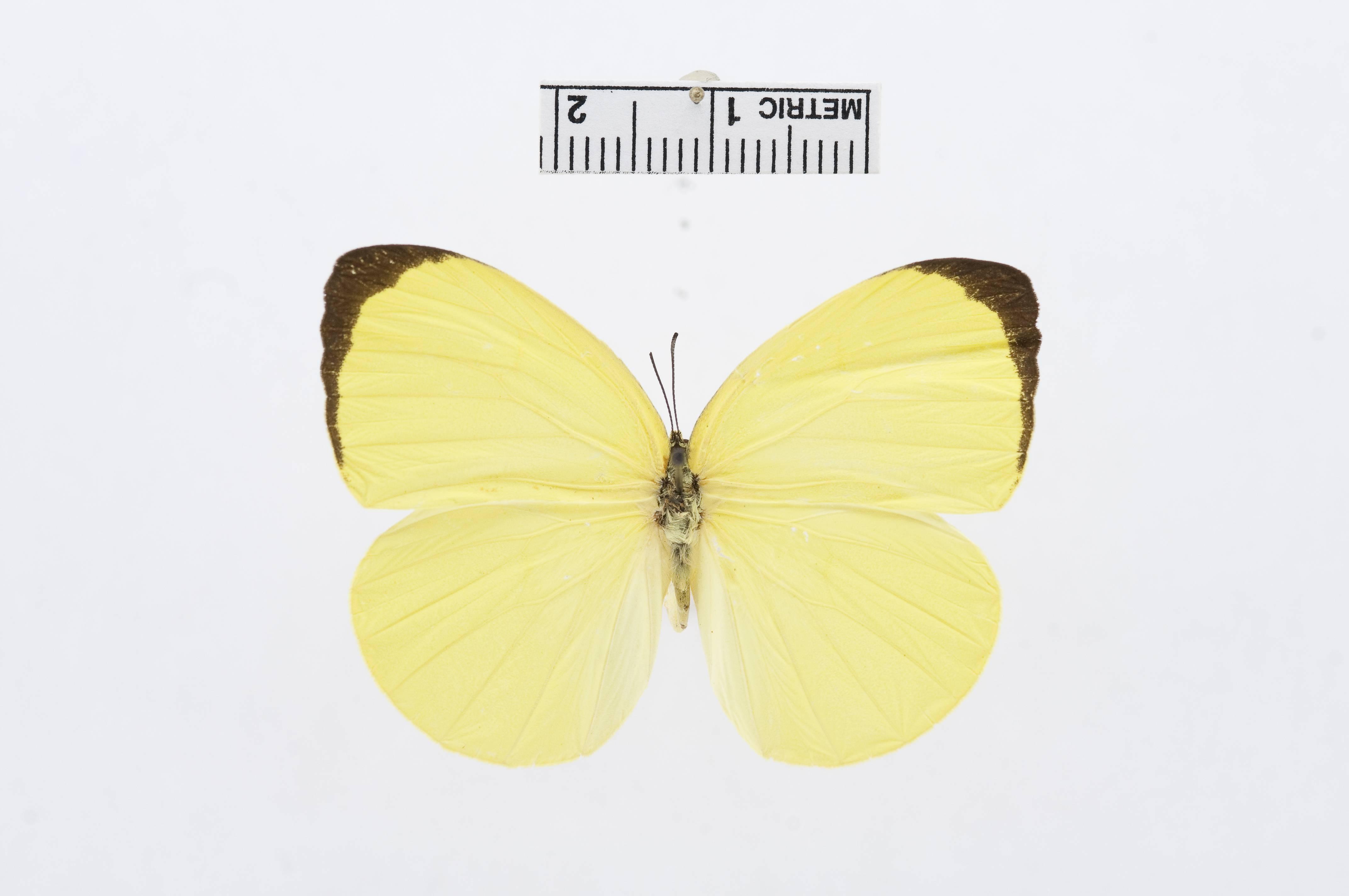 Image of Tree Yellow