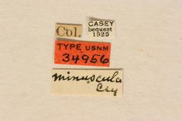 Image of <i>Leptura propinqua</i> Bland 1865