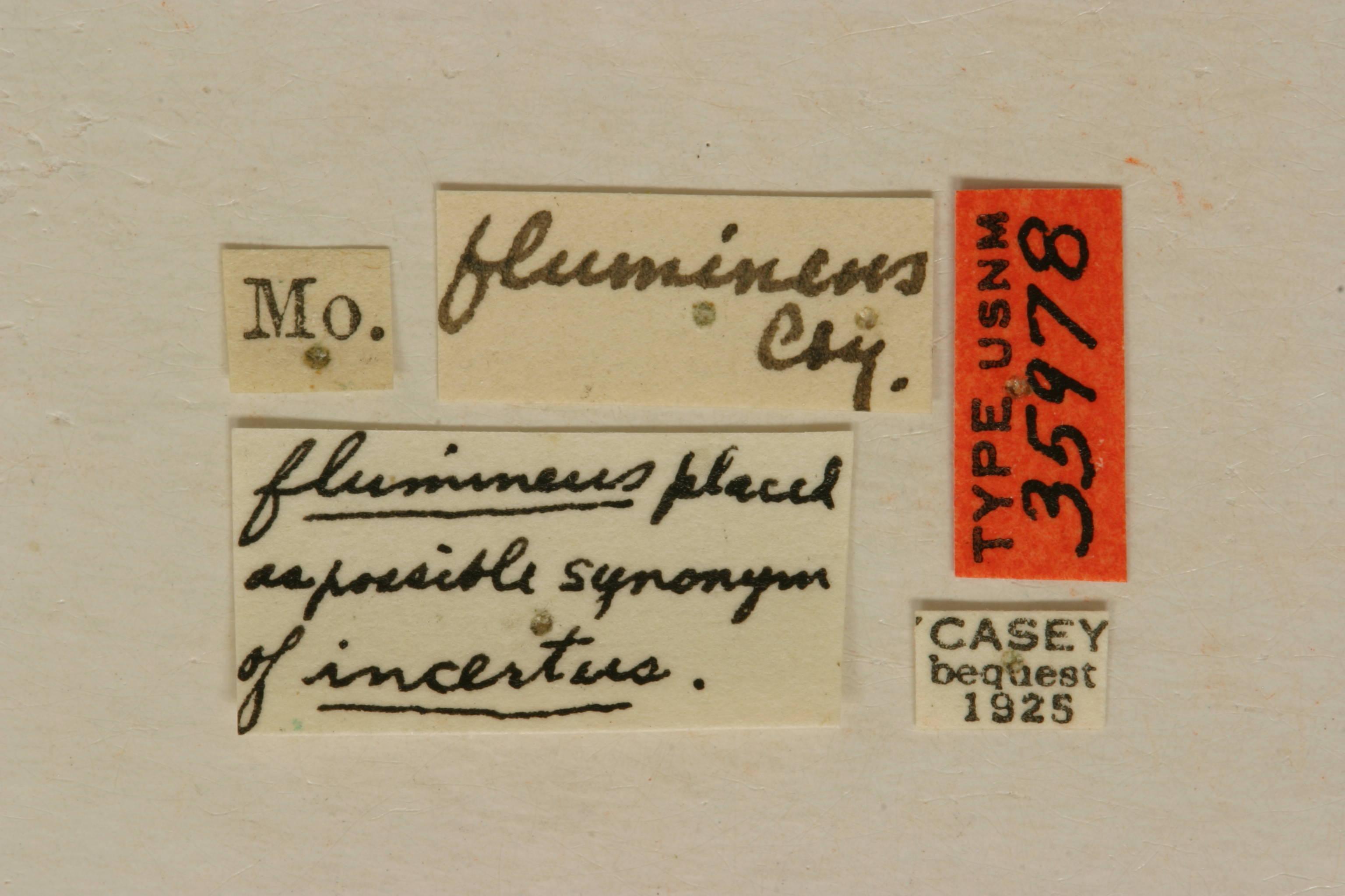 Image of <i>Parelaphidion aspersum</i> (Haldeman 1847)