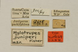 Image of <i>Semanotus juniperi</i> (Fisher 1915)