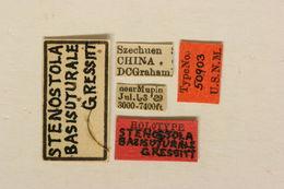 Image of <i>Stenostola basisuturale</i> Gressitt 1935