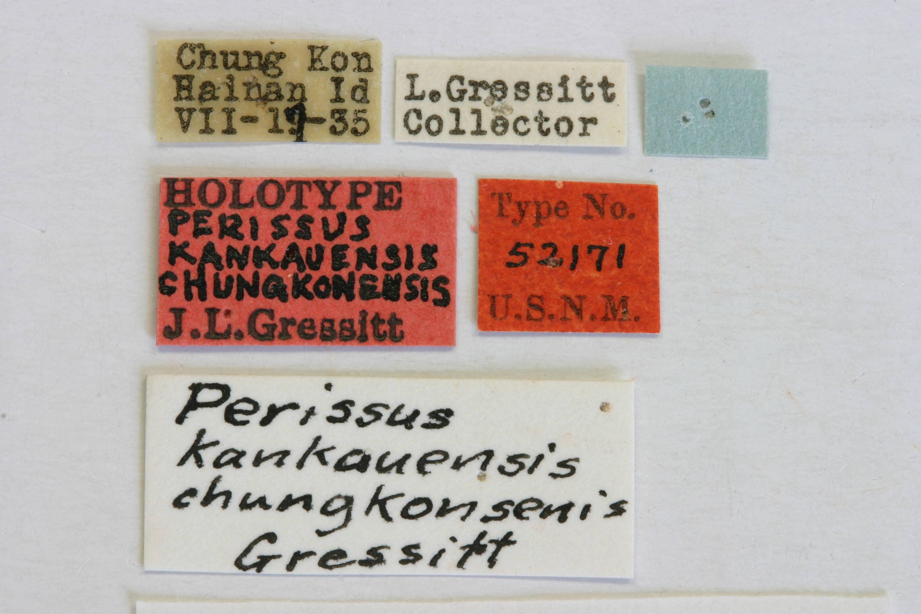 Image of <i>Perissus kankauensis</i> ssp. <i>chungkonsenis</i> Gressitt