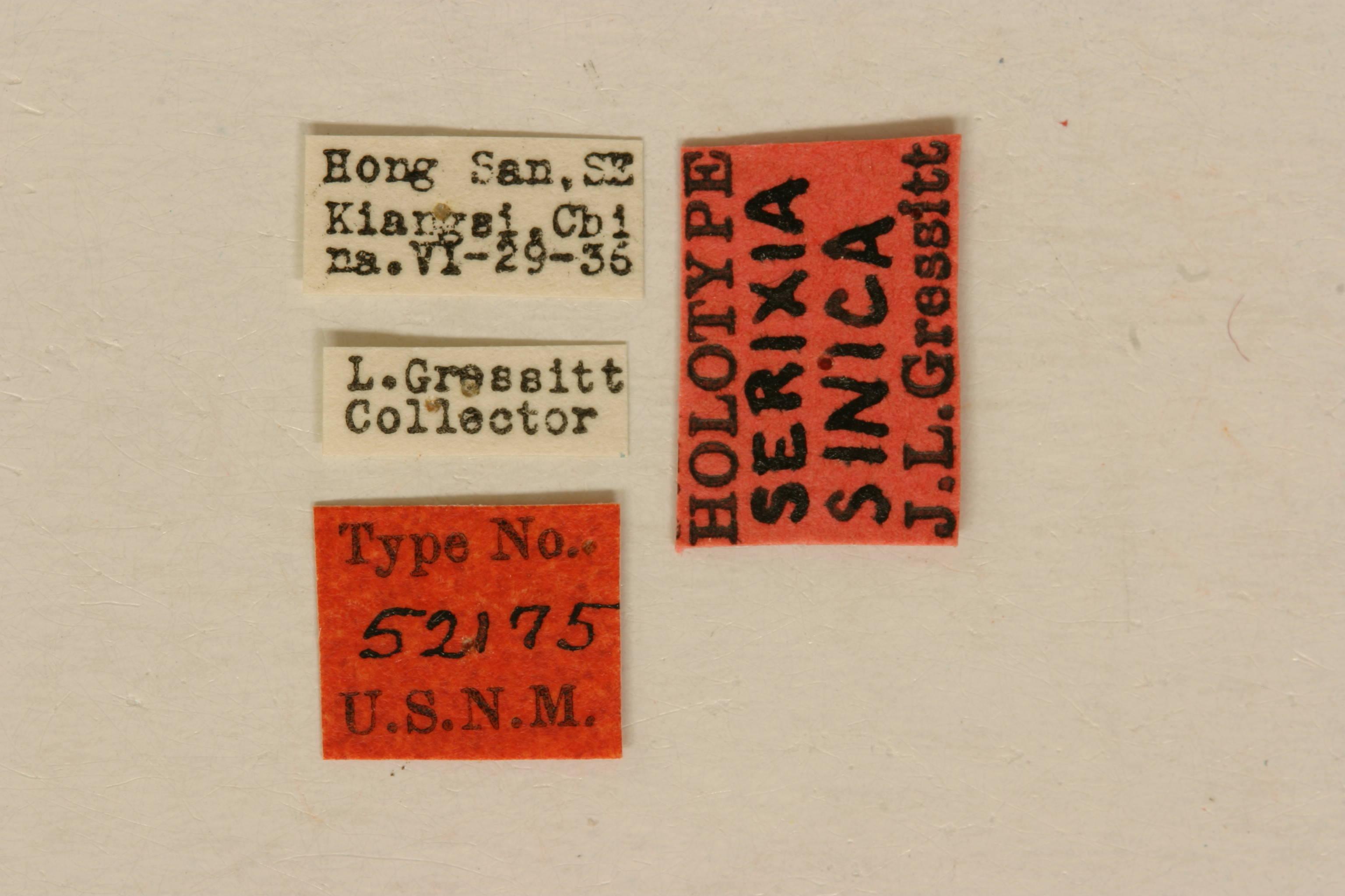 Image of <i>Serixia sinica</i> Gressitt 1937