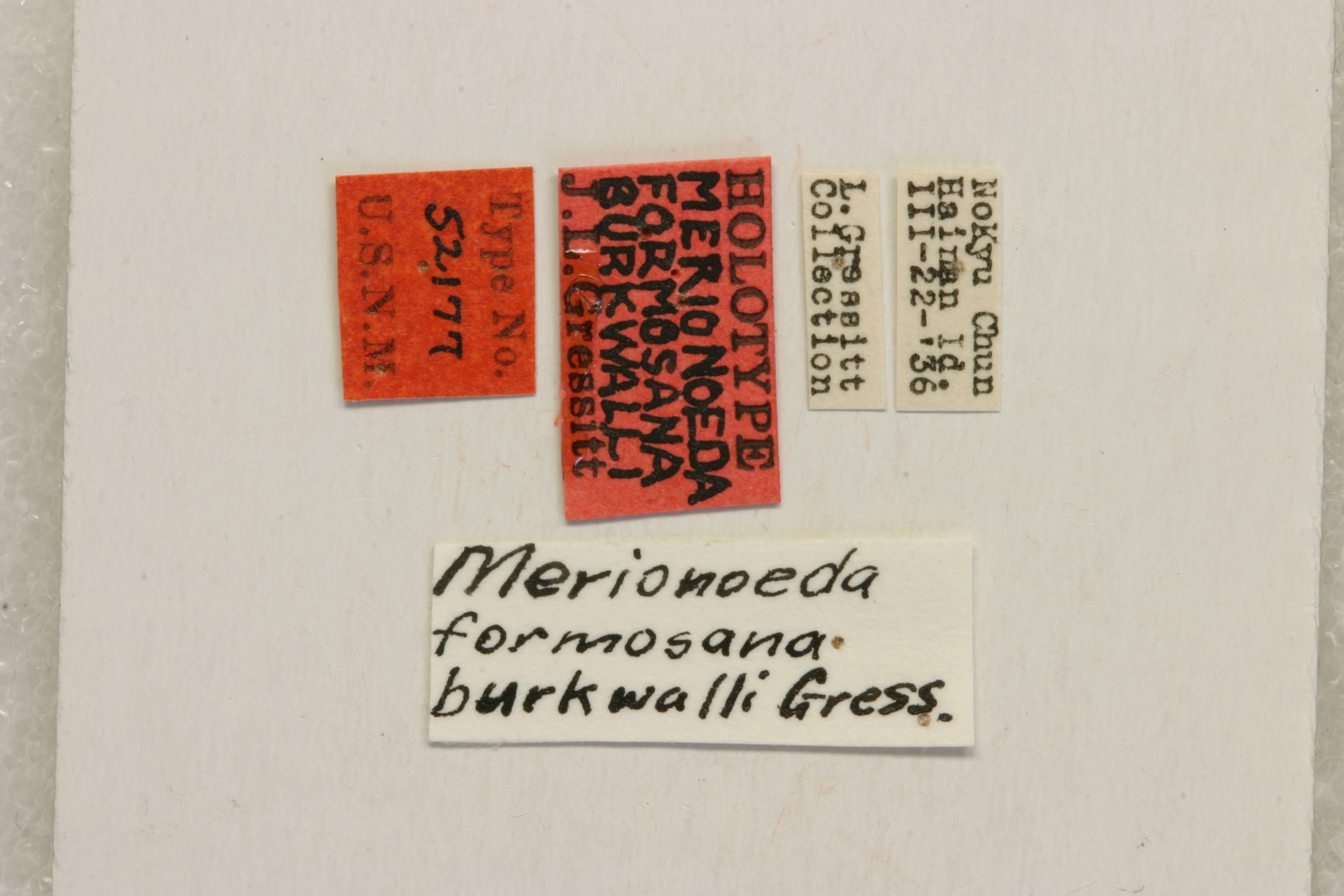Image of <i>Merionoeda</i> (<i>Ocytasia</i>) <i>formosana burkwalli</i> Gressitt 1940