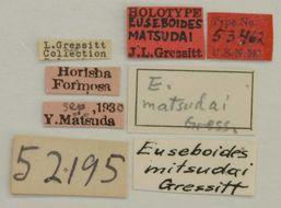 Image of <i>Euseboides matsudai</i> Gressitt 1938