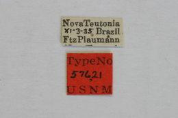 Image of <i>Ozineus jubapennis</i> Fisher 1938