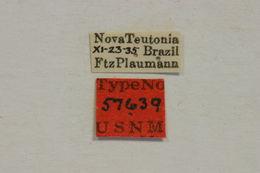 Image of <i>Hyperplatys cana</i> (Bates 1863)