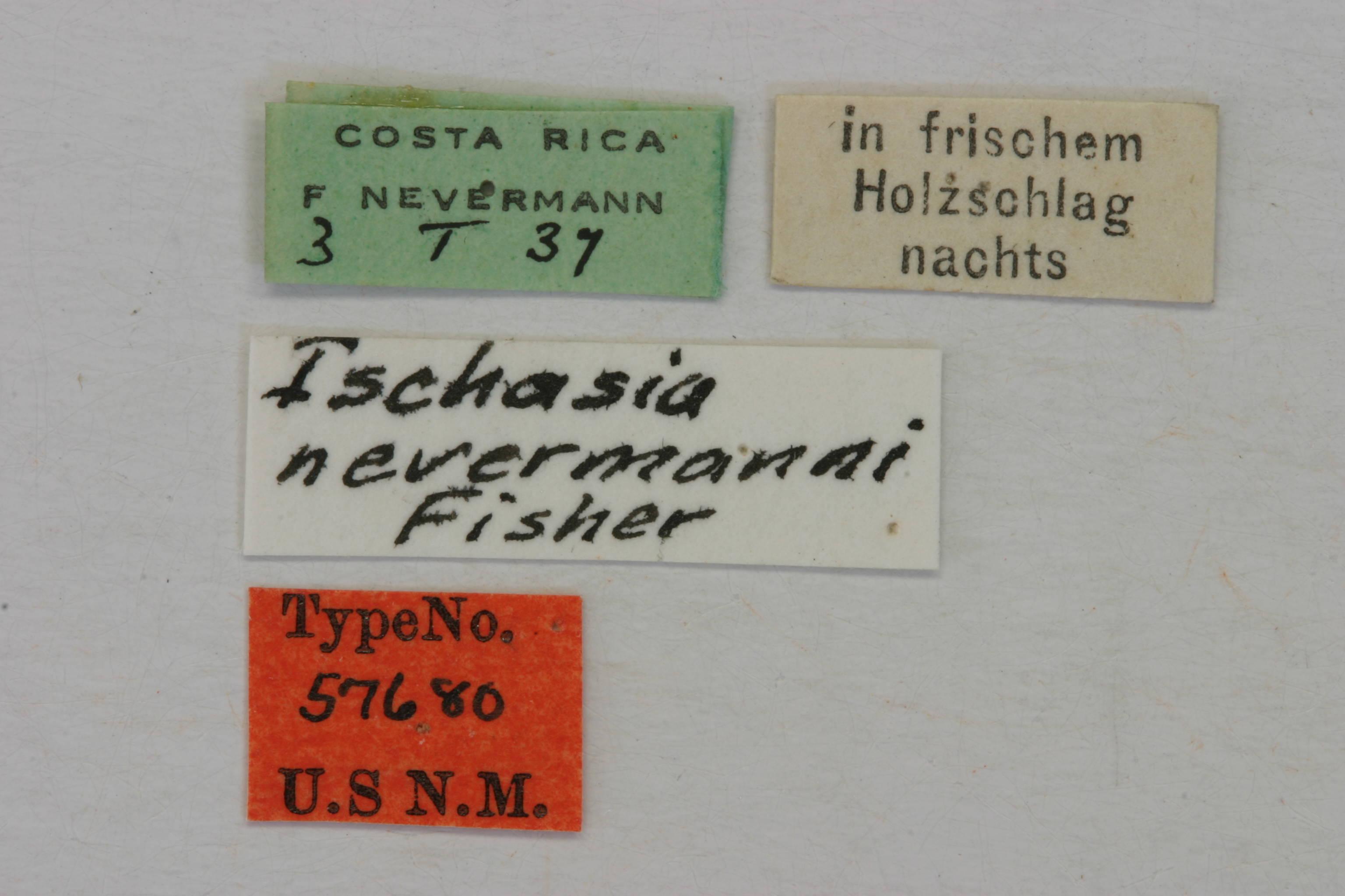 Image of <i>Ischasia nevermanni</i> Fisher 1947