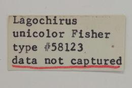 Image of <i>Lagocheirus unicolor</i> Fisher 1947