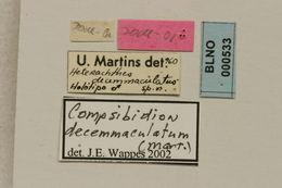 Image of <i>Compsibidion decemmaculatum</i> (Martins 1960)