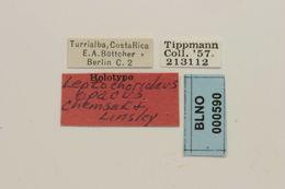 Image of <i>Leptochoriolaus opacus</i> Chemsak & Linsley 1976