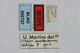Image of <i>Asynapteron equatorianum</i> (Martins 1960)