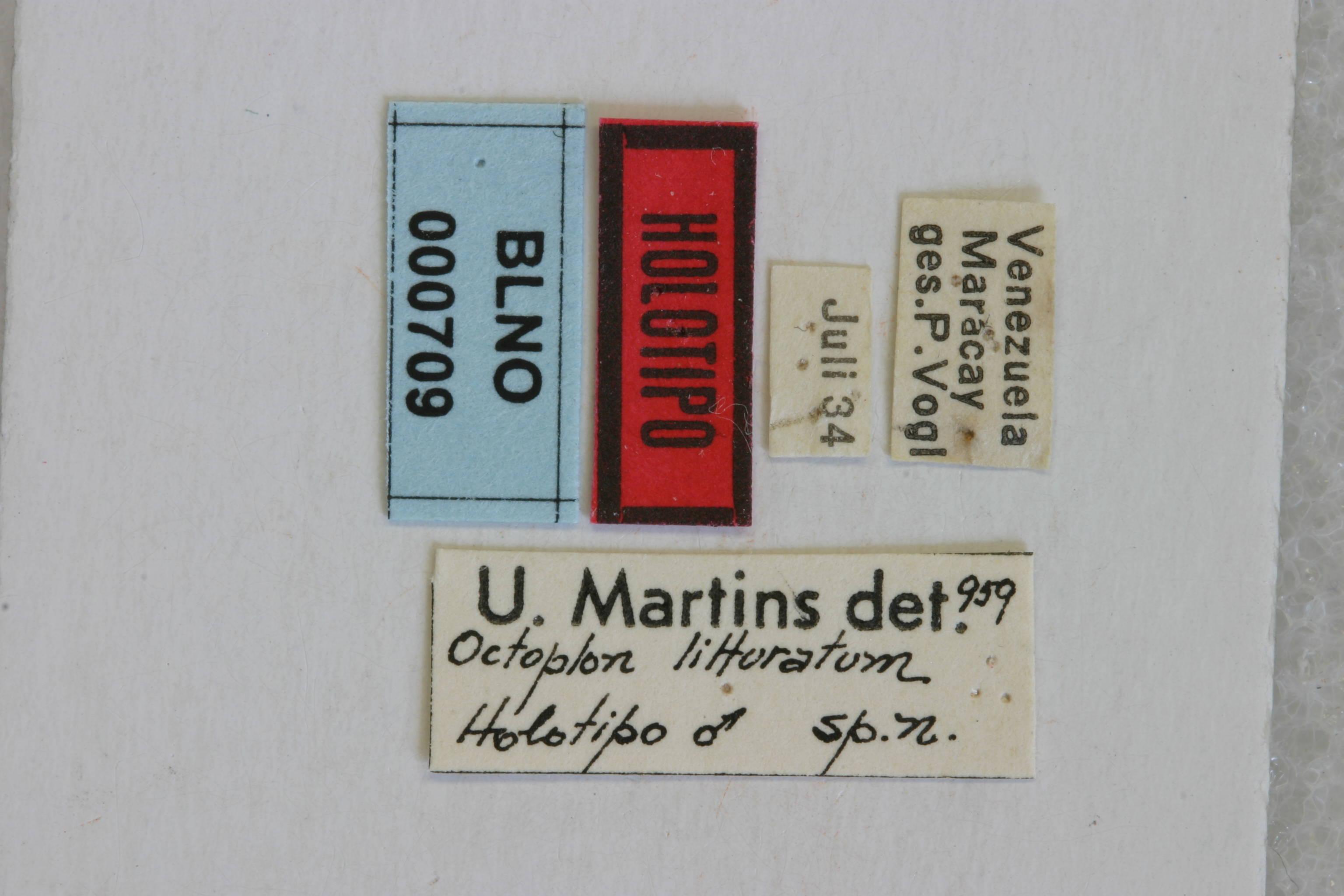 Image of <i>Compsibidion litturatum</i> (Martins 1960)