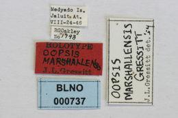 Image of <i>Oopsis marshallensis</i> Gressitt 1956