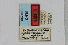 Image of <i>Ophtalmoplon inerme</i> Martins 1965