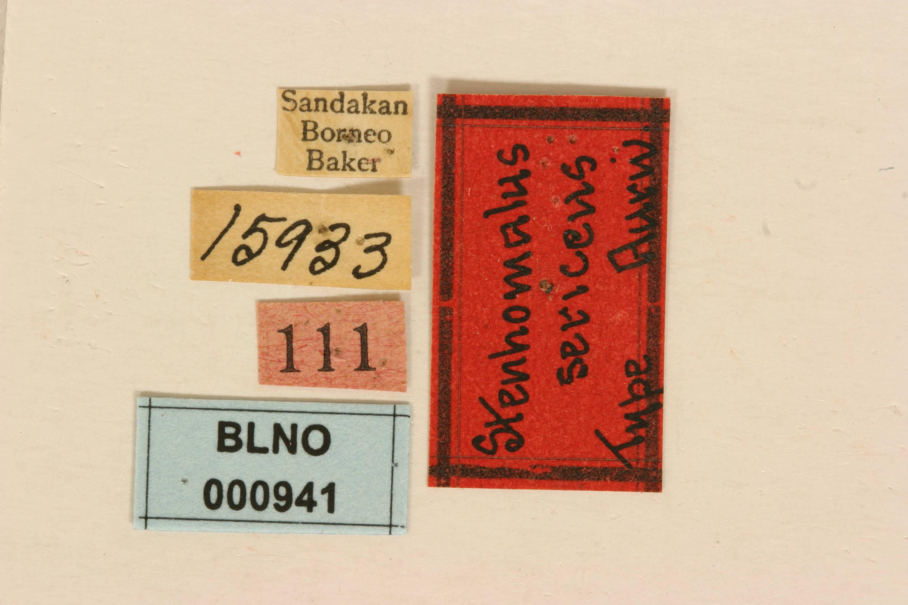 Image of <i>Stenhomalus sericeus</i> Aurivillius 1922