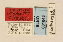 Image of <i>Urgleptes clarkei</i> Chemsak 1966
