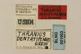 Image of <i>Thranius dentatipennis</i> Gressitt 1954