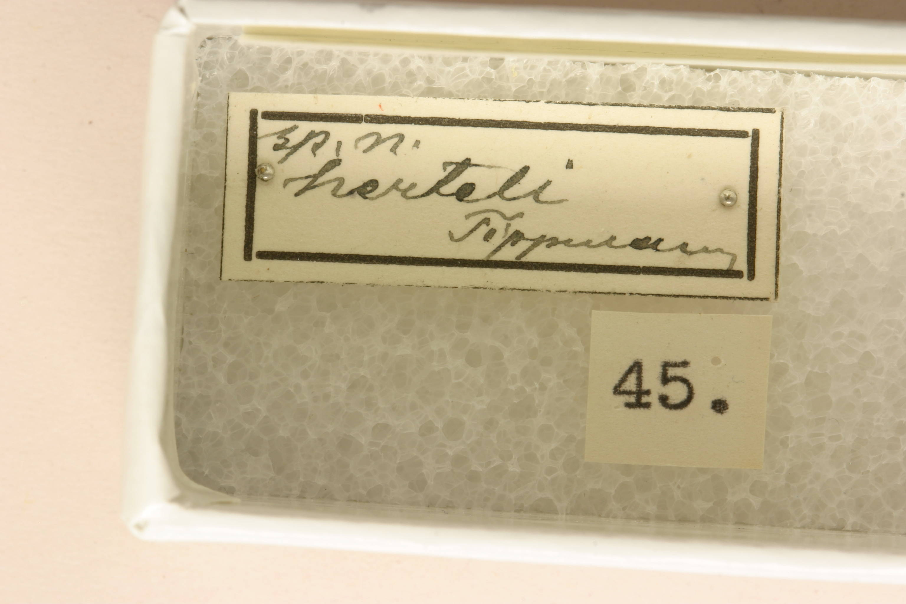 Image of <i>Chydarteres octolineatus</i> (Thunberg 1822)