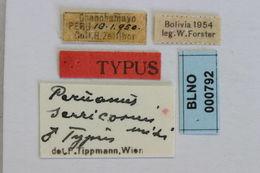 Image of <i>Peruanus serricornis</i> Tippmann 1960