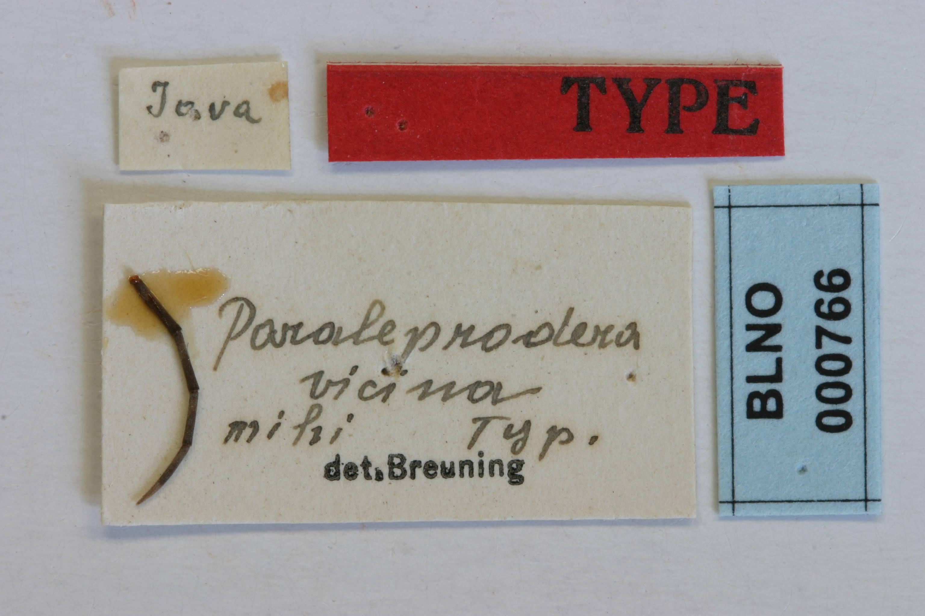 Image of <i>Paraleprodera vicina</i> Breuning 1940
