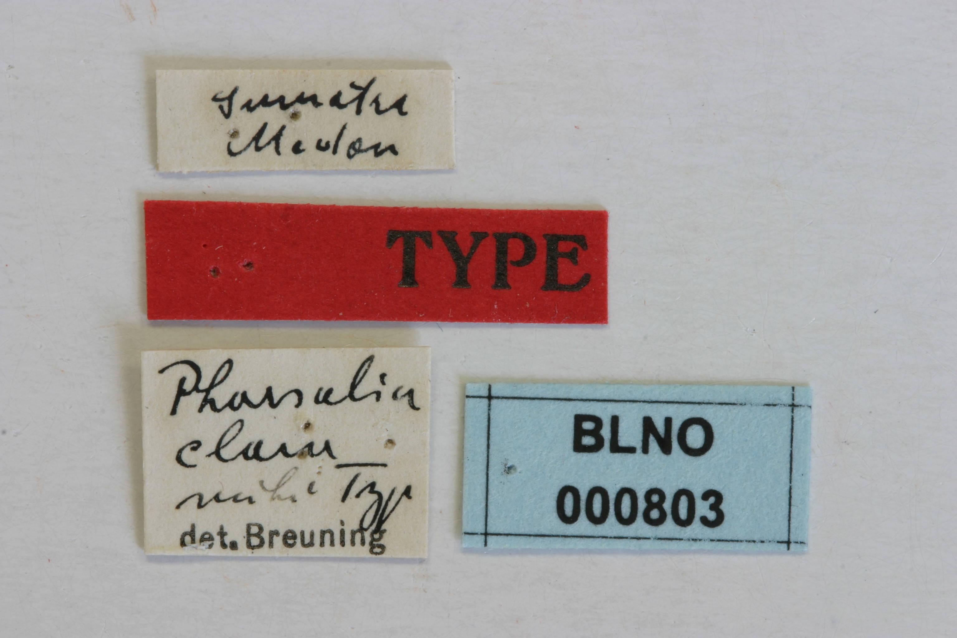 Image of <i>Pharsalia</i> (<i>Eopharsalia</i>) <i>clara</i> Breuning 1940