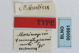 Image of <i>Morimopsis truncatipennis</i> Breuning 1940