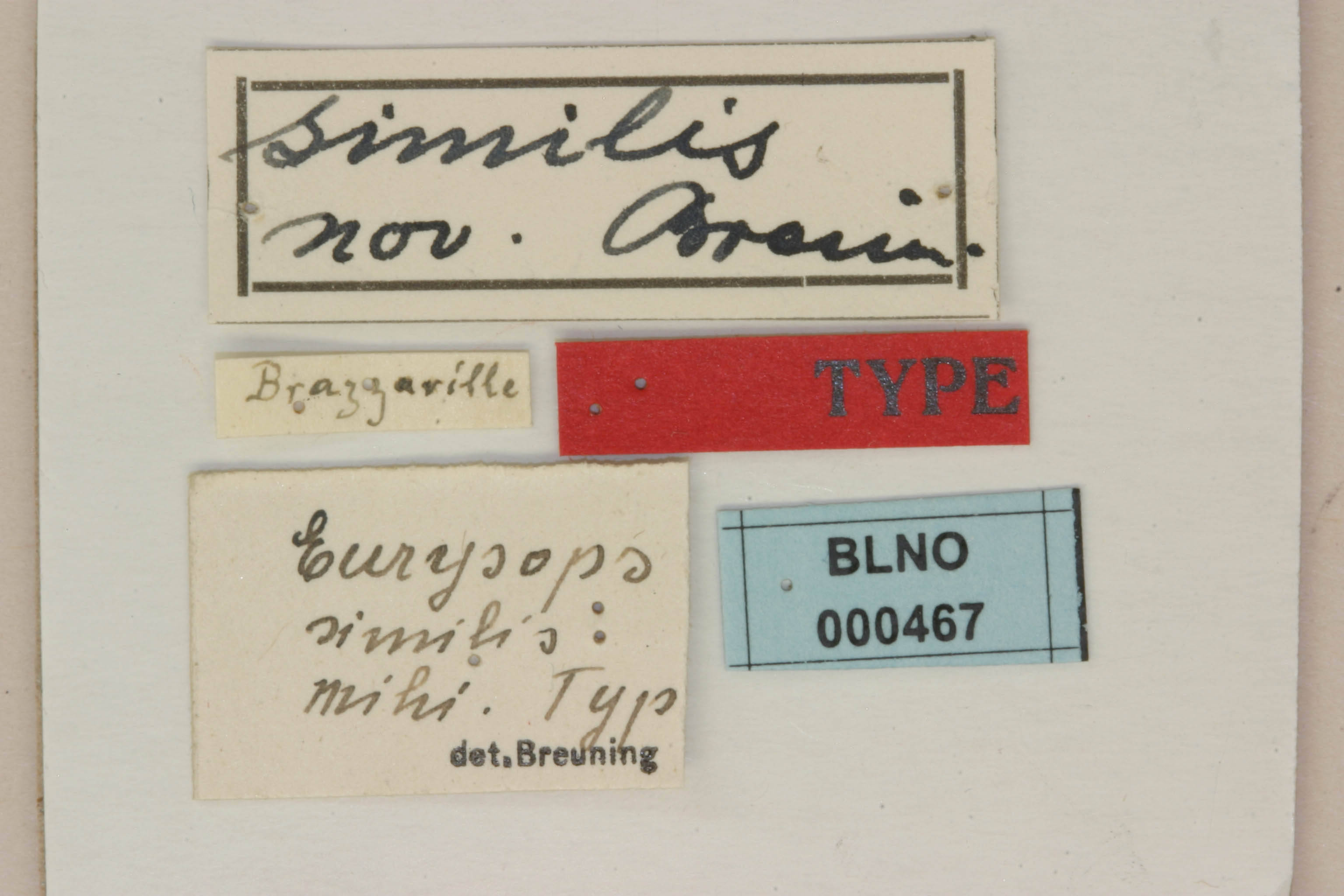 Image of <i>Eurysops similis</i> Breuning 1937
