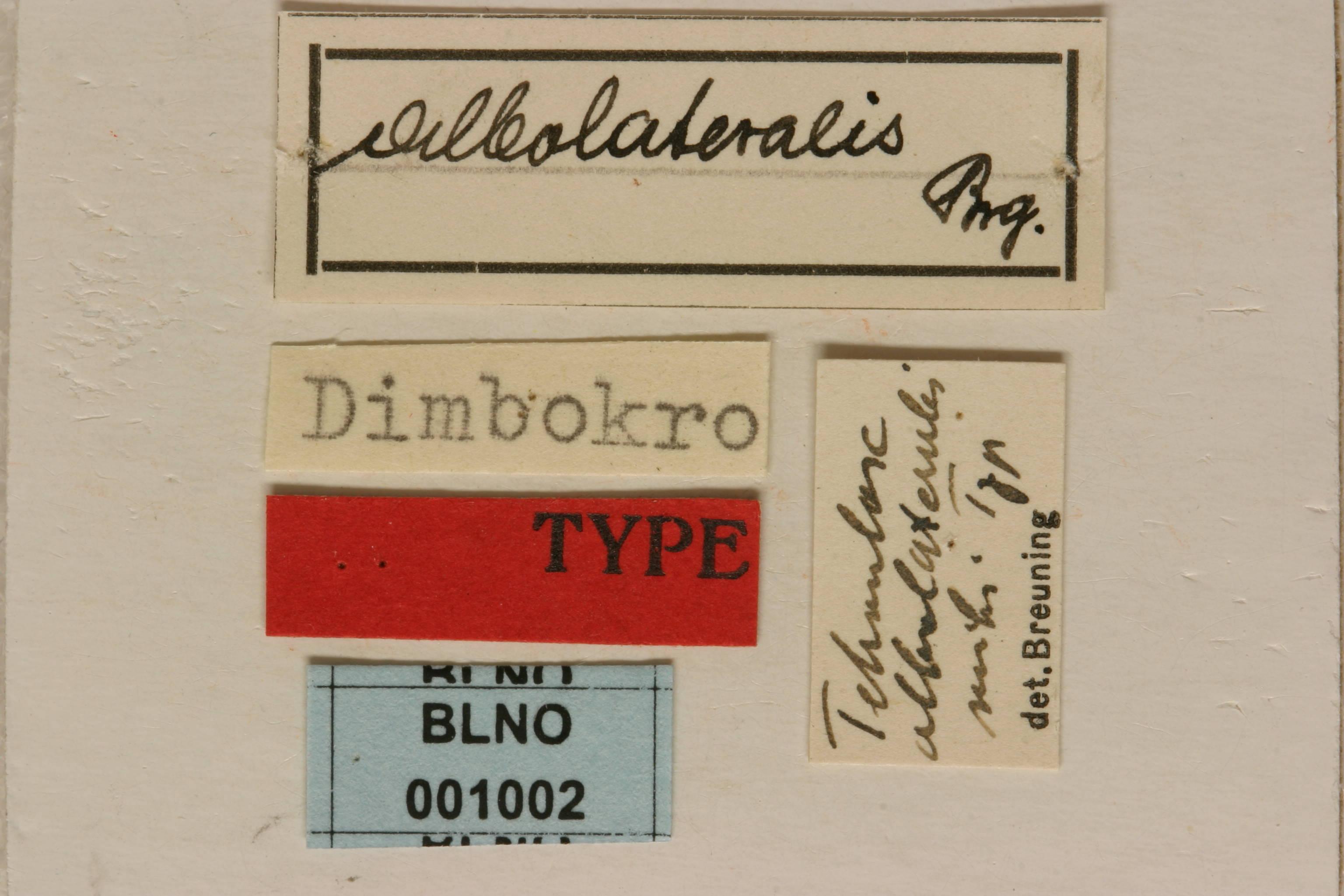 Image of <i>Tetraulax albolateralis</i> Breuning 1940
