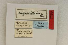 Image of <i>Frea nigrovittata</i> Breuning 1935