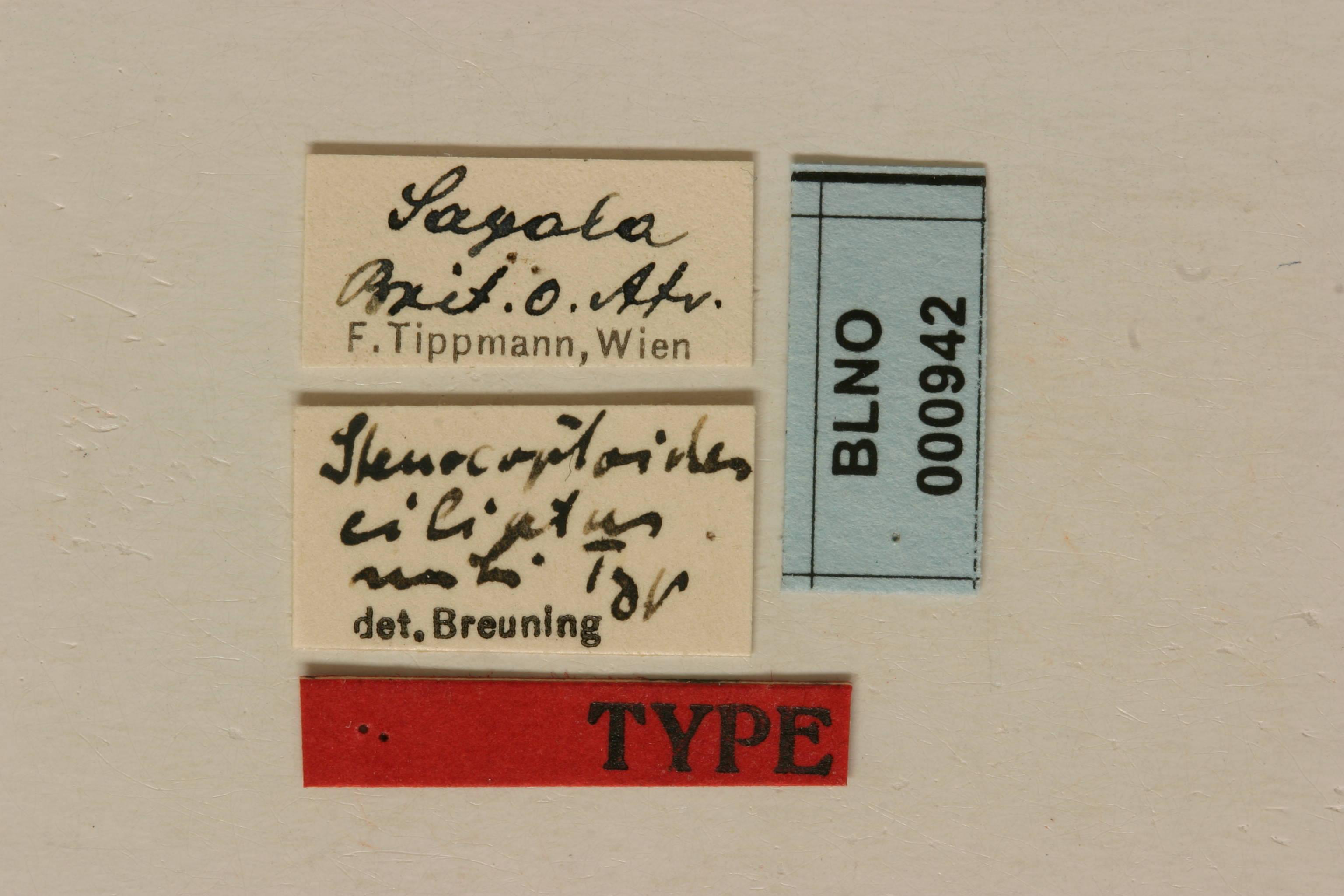 Image of <i>Stenocoptoides ciliatus</i> Breuning 1942