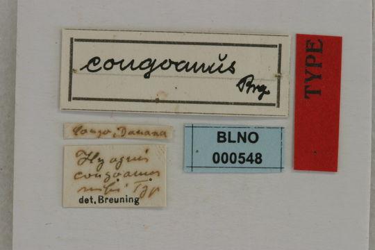 Image of <i>Hyagnis congoanus</i> Breuning