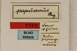 Image of <i>Similosodus papuanus</i> (Breuning 1940)