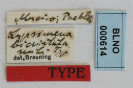 Image of <i>Lypsimena bicristata</i> Breuning
