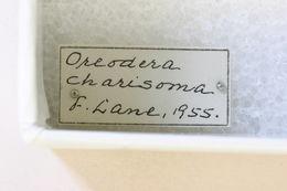 Image of <i>Oreodera charisoma</i> Lane 1955