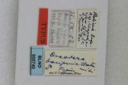 Image of <i>Oreodera basipenicillata</i> Tippmann 1960