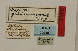 Image of <i>Hyllisia stenideoides guineensis</i> Breuning 1957