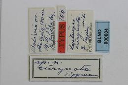 Image of <i>Lepturges eurynota</i> Tippmann 1960